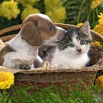 wallpaper-dog-cat-photo-04