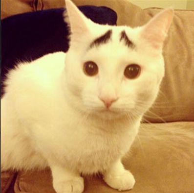 八の字眉のネコ「サムさん」
