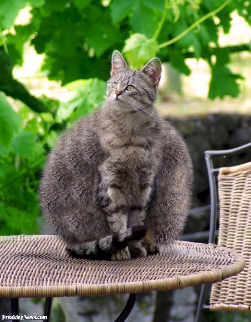 Fat-Cat--19740