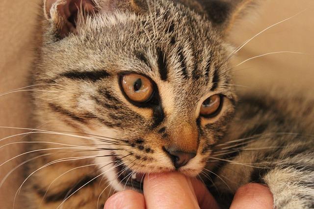cat-266097_640
