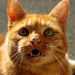 cat-463794_640