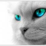 cat00034