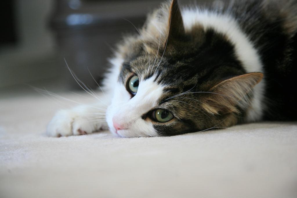 cat00530
