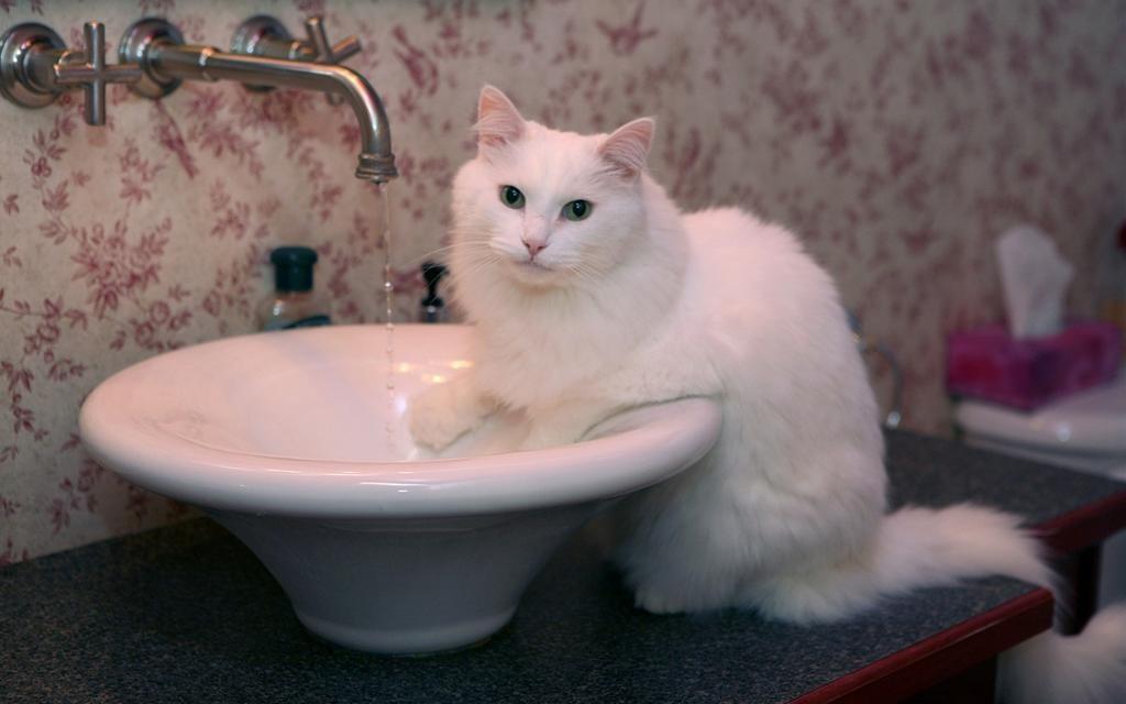 cat01136