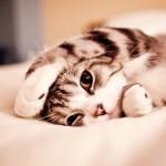 cat01201