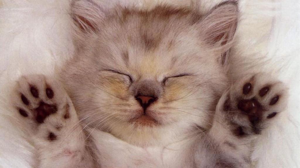 cat01215