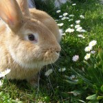 rabbit-344311_640