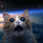 SPACE-CAT