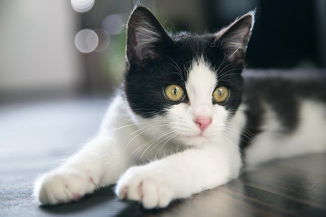 cat-711340_640