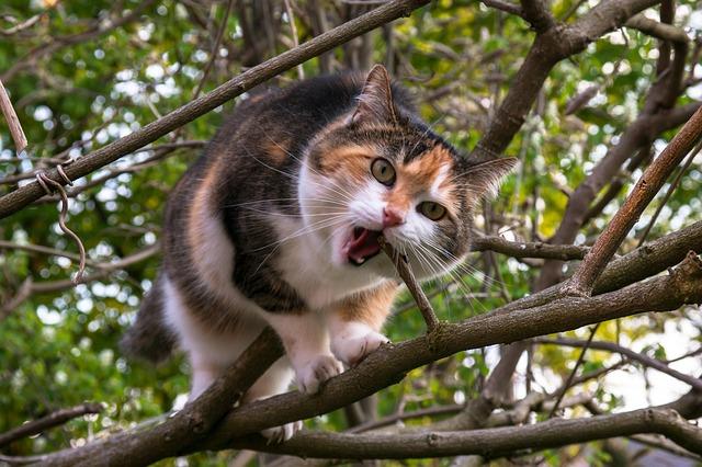 cat-736420_640