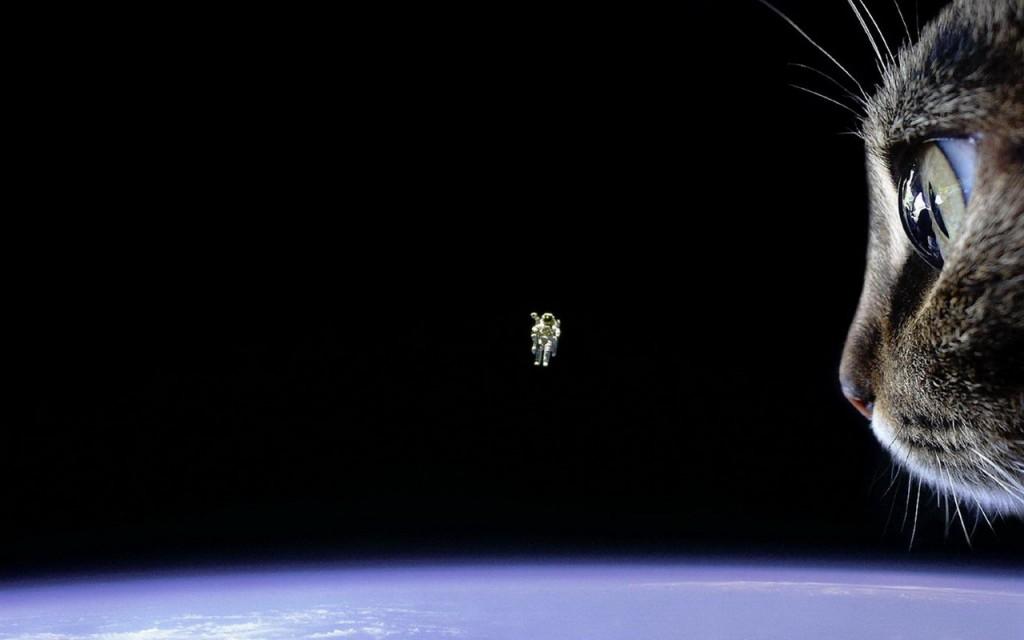 space-cat_1280x800