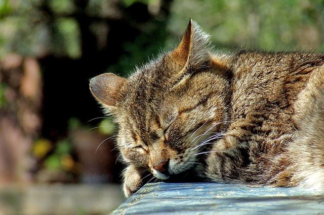 cat-590684_640