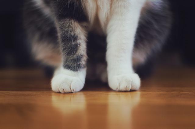 cat-698593_640