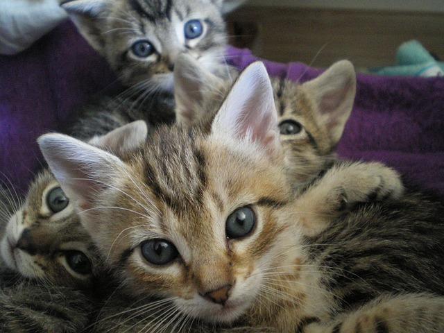 kittens-668876_640