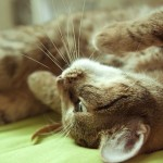 cat-715910_640