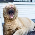 yawning-238487_640
