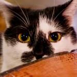 cat-644934_640