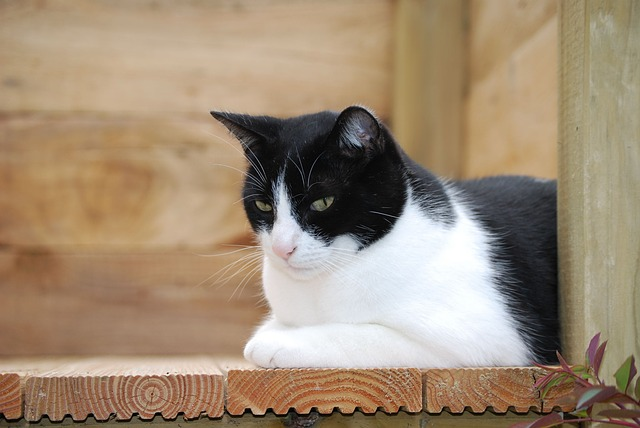 cat-959119_640
