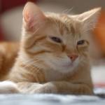 cat-959275_640
