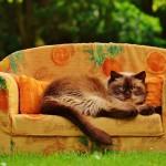 sofa-792503_640