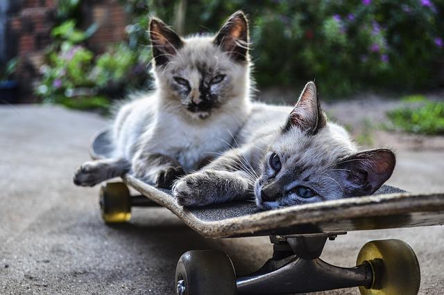cat-1022999_640