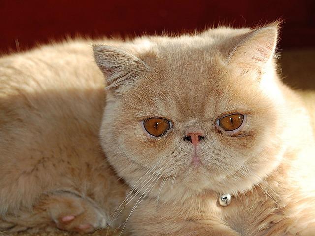 cat-13458_640