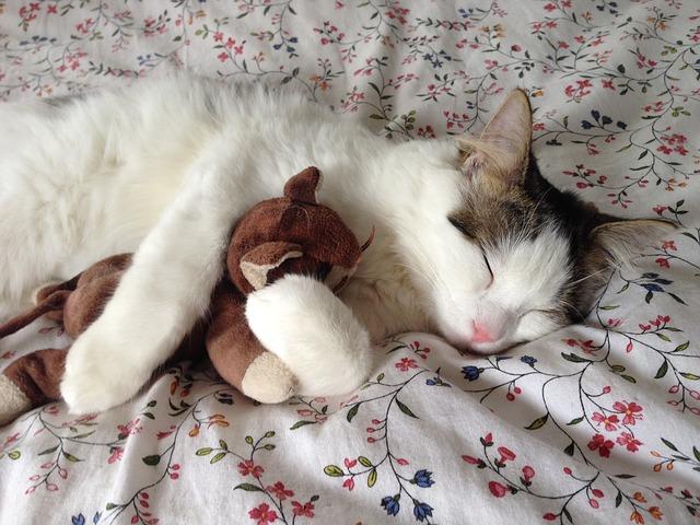 cat-289591_640