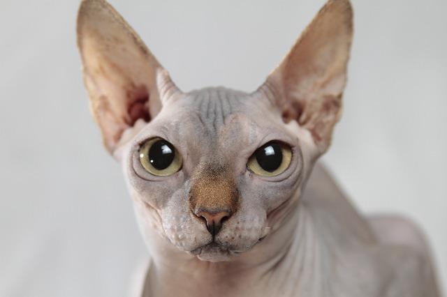 cat-629064_640