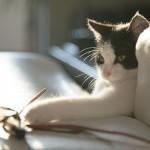 cat-716559_640