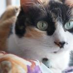 cat-803124_640