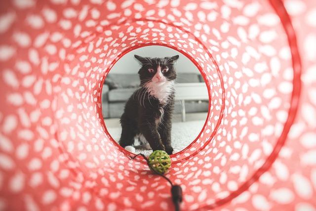 cat-932846_640