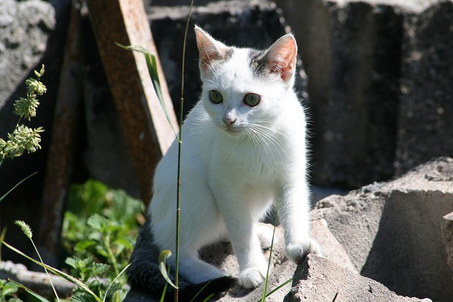 stray-animal-1032659_640