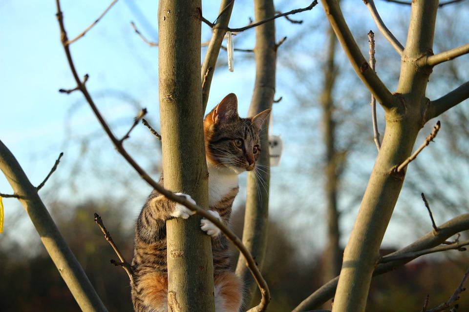 cat-1075870_960_720