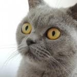 cat-179842_960_720