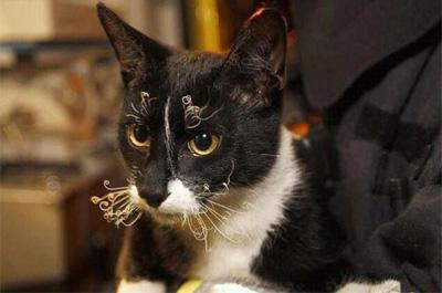 ひげが丸まっている猫