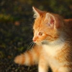 cat-1074793_960_720