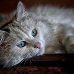 cat-1146504_960_720