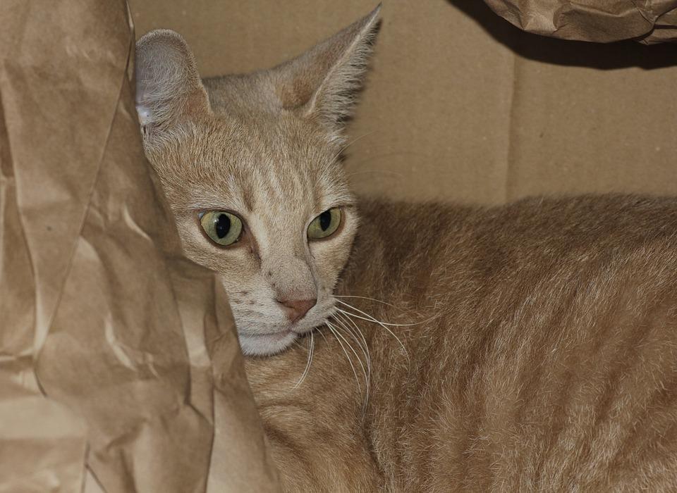 cat-441923_960_720