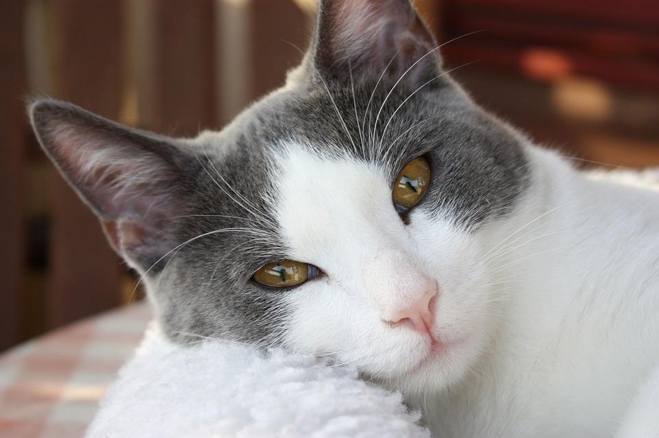 cat-1165587_960_720