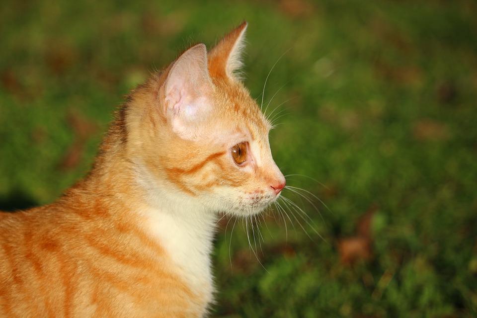 cat-1196259_960_720