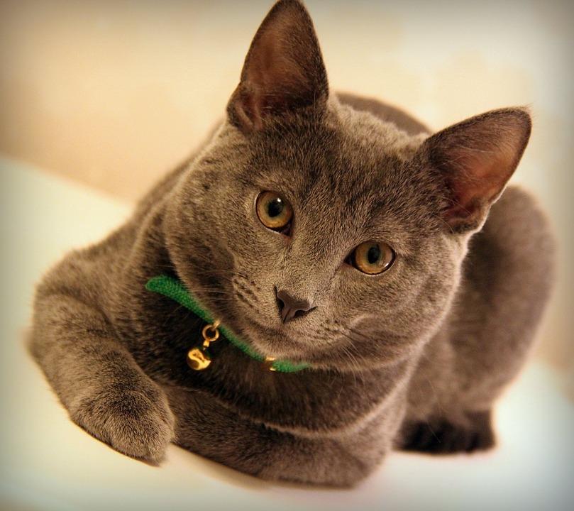 cat-1250721_960_720