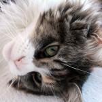 kitten-1274863_960_720