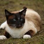 cat-1234955_960_720