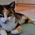 cat-1284969_960_720