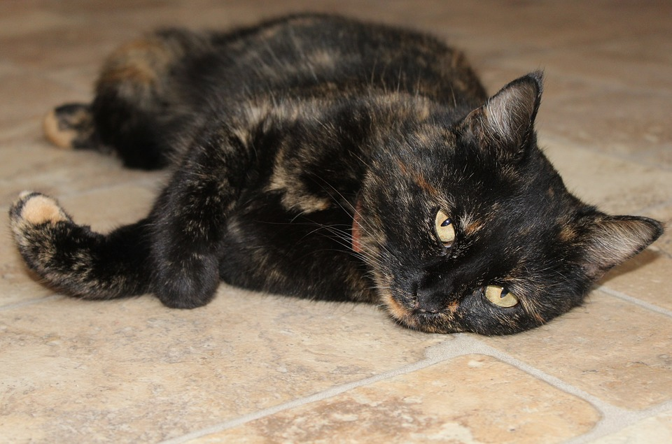 cat-1291018_960_720