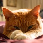 cat-1347176_960_720