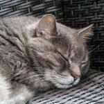 cat-1524309_960_720