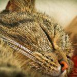 cat-1607589_960_720
