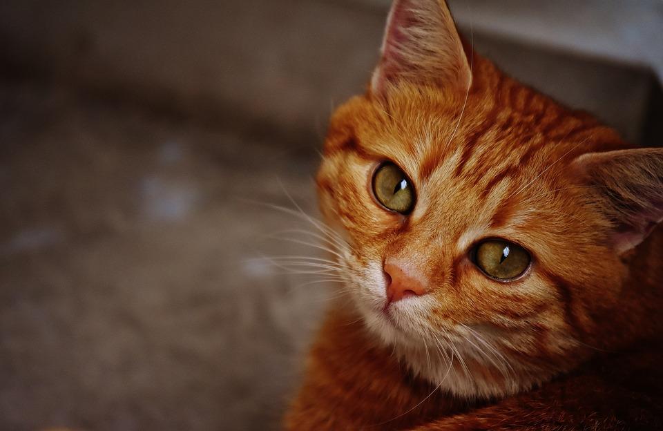 cat-1675460_960_720