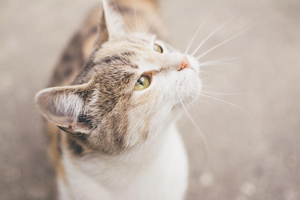 猫の平熱は38.4度。体温の測って健康チェックをしよう